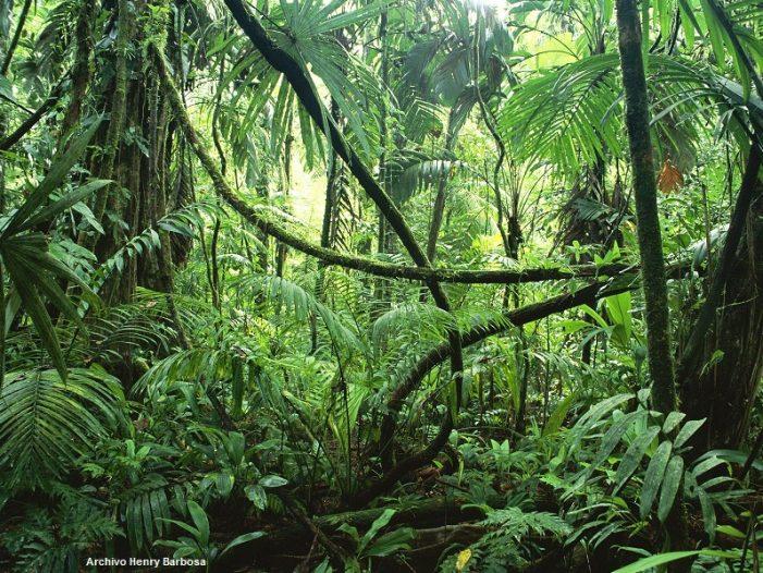 En fallo histórico Corte Suprema ordena al Gobierno protección inmediata de la Amazonía Colombiana