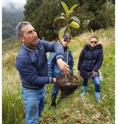 Gobernación de Cundinamarca sembró 6.600 árboles para ayudar a mitigar el calentamiento global