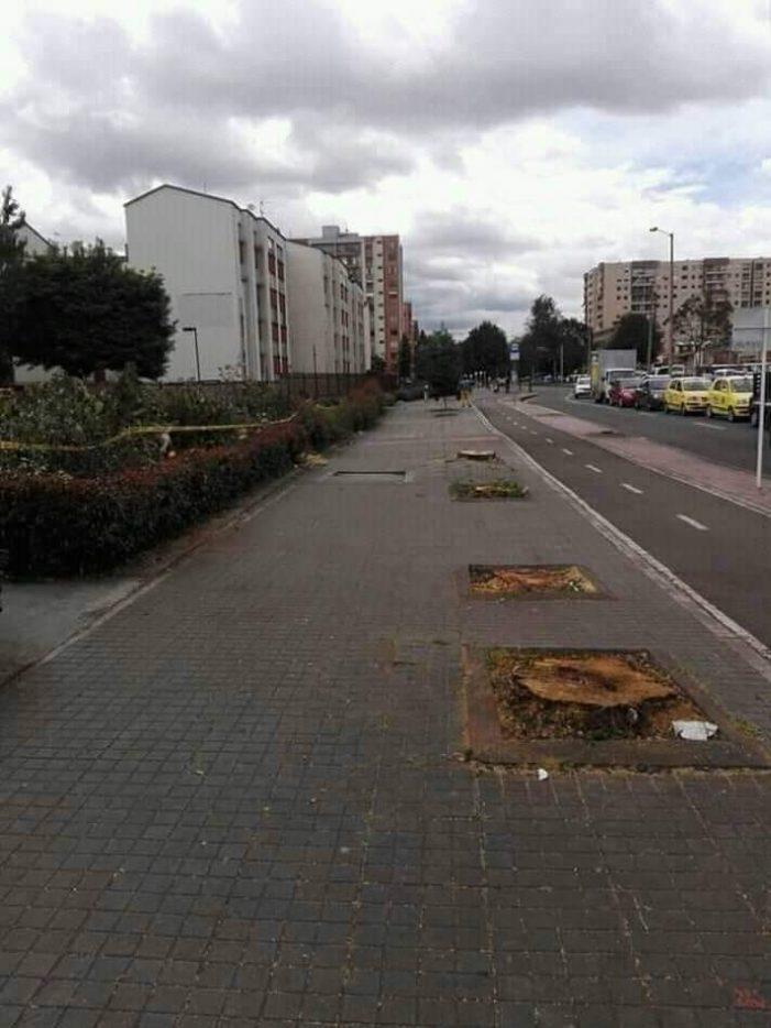 Bogotá: tala de árboles, nuevas siembras y falta de transparencia