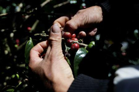 El sur de Colombia puede ser la clave para aumentar la producción de café