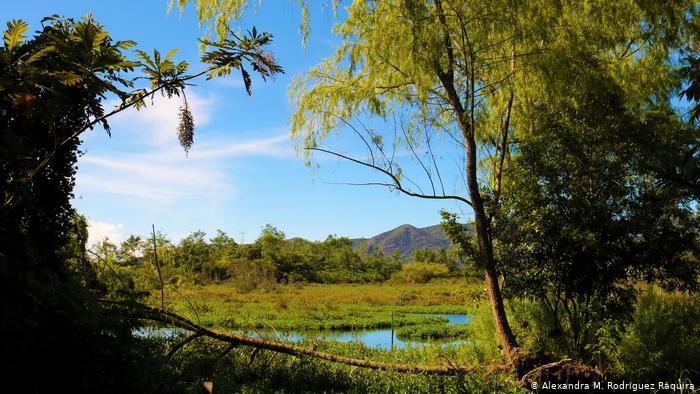 Aprobación del POT de Bogotá no modifica situación de la reserva forestal Van der Hammen: CAR