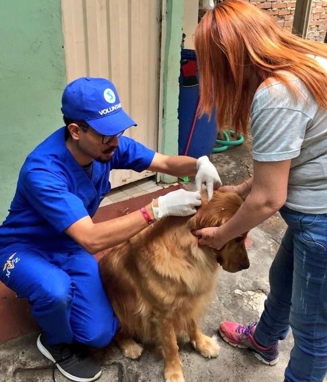 Programación de las jornadas de esterilización canina y felina en Bogotá