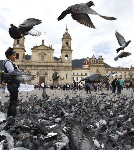Bogotá implora a los turistas que dejen de alimentar a las palomas