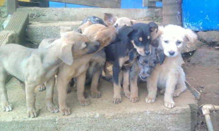 ¿Cuánto deberá pagar en sanción o multa una persona por maltratar a un animal?