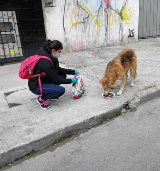 Segunda 'Ruta Animal' llevó comida a cientos de animales en Bogotá y Cundinamarca