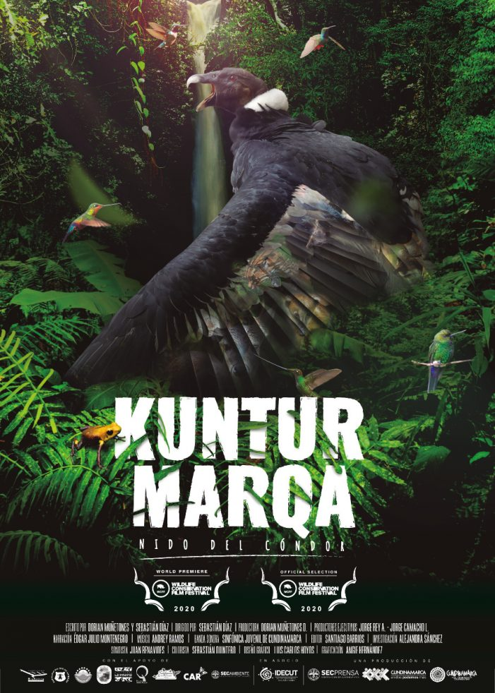 'Kuntur Marqa', el documental que hace parte del Wildlife Conservation Film Festival