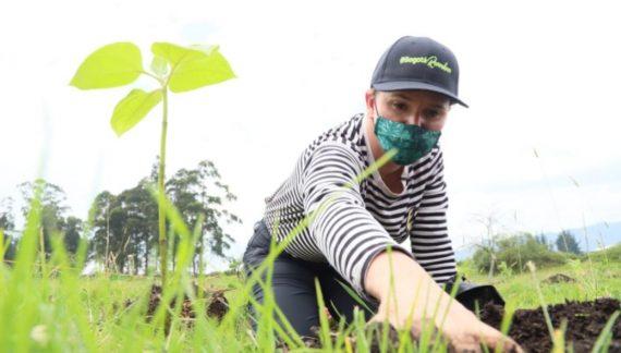 Secretaría de Ambiente espera plantar cerca de 200.000 árboles este año