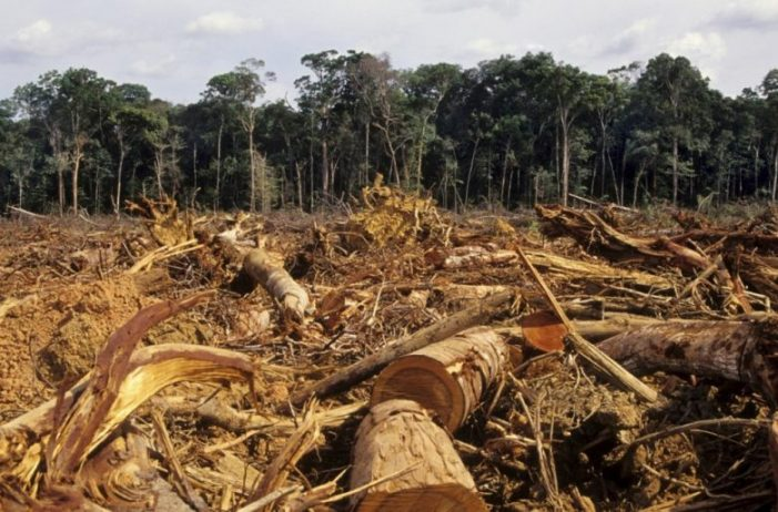 Lanzan Documento Conpes para el control de la deforestación y gestión sostenible de los bosques en Colombia
