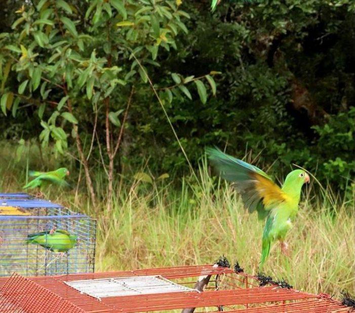 Más de 3.600 animales silvestres fueron recuperados el último año en Bogotá