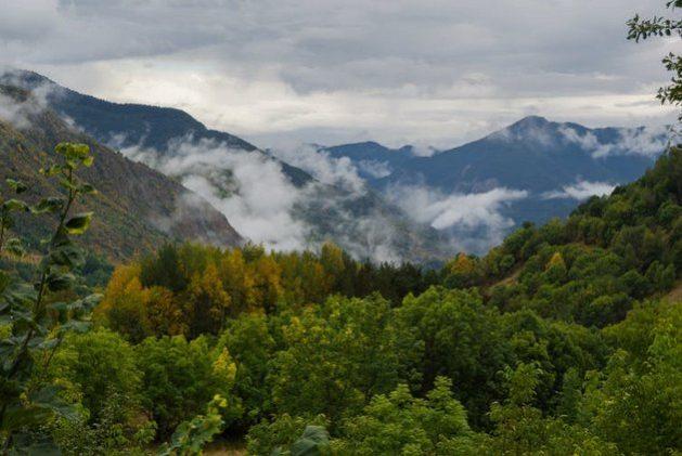 Diez mentiras sobre los bosques que lastran el futuro del planeta