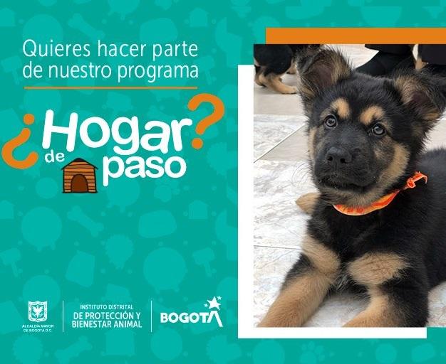 Entérate como hacer parte del programa 'Hogar de paso' de Animales Bogotá
