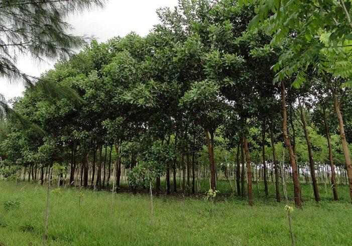Senado aprobó proyecto para fortalecer la reforestación del territorio nacional