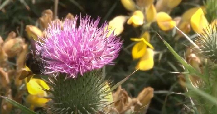 Convierten peligrosa planta invasora del Sumapaz en bellas artesanías