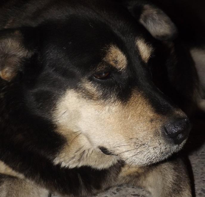 Este sábado se realizará jornada de esterilización de mascotas en Bogotá